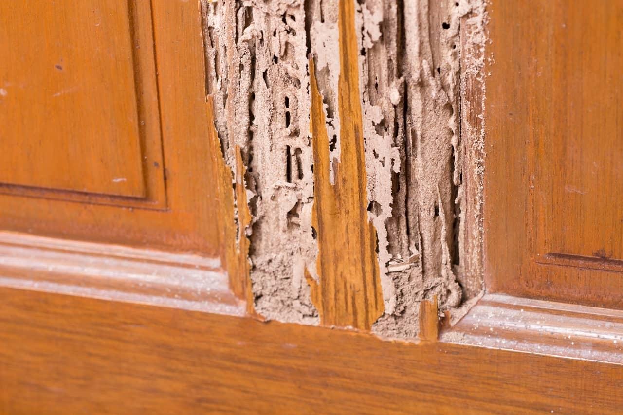 Wooden Doors Suffer from Termite Exposure